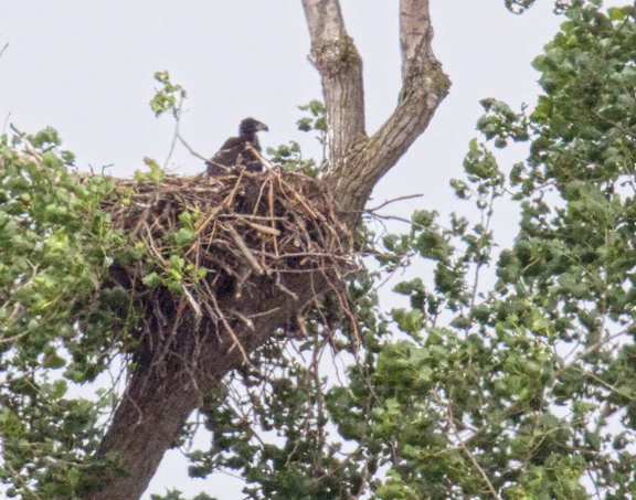 Iroquois county IL Eagles Nest